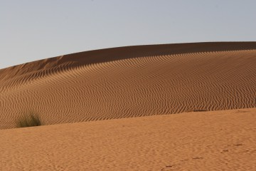 medium_Dune_4.jpg