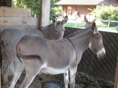 n-les-ânes.jpg