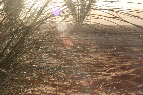 Mauritan soleil.jpg